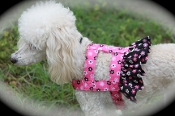 Bloom Dog Harness