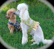 Lemonade Harness or Bolero