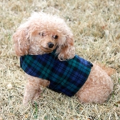Blue and Green flannel Plaid Dog Bolero