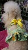 Custom Easy-On designer dog harnesses made with a ruffle or with out ruffles